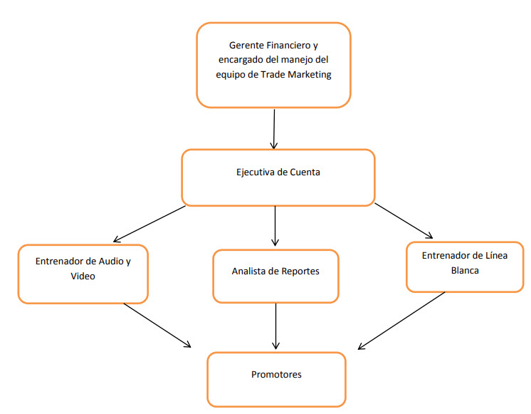 Estructura del equipo de Trade Marketing